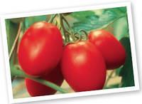 Семена томата Колибри F1. Упаковка 250 семян. Производитель Clause