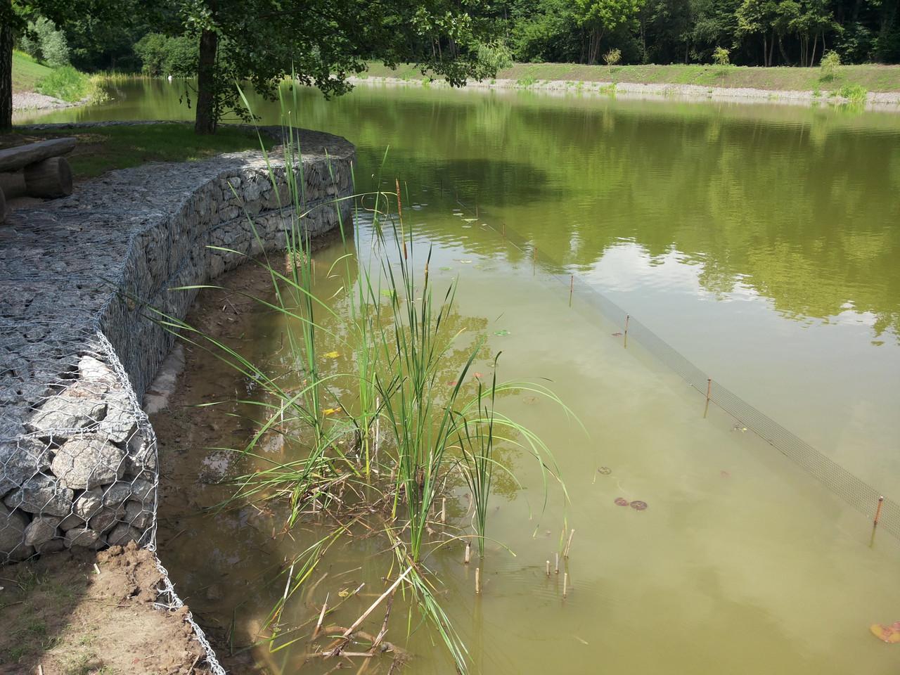 Посадка водных растений и прибережных растений