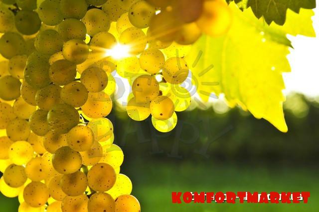 """Фотообои: """"Виноград в лучах солнца"""""""