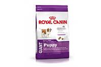 Royal Canin Giant Puppy/Роял Канин для щенков гигантских пород от 2 до 8мес.
