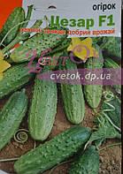 Огурец Цезарь драже 45-55 семян