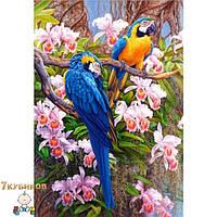 Картина 40х50 Яркие попугаи 2. Рисование по номерам Идейка