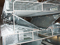 Клетка для кролей мини ферма КМОП -144 ( смешанное содержание 12 /72)