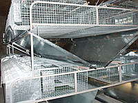Клітка для кролів міні ферма КМОП -144 ( змішане утримання 12 /72)