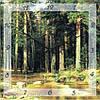 "Часы настенные ""Хвойный лес"" (450мм) [Стекло, Открытые]"