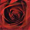 "Часы настенные ""Алая роза"" (300мм) [Стекло, Открытые]"