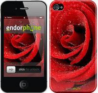 "Чехол на iPhone 4s Красная роза ""529c-12"""