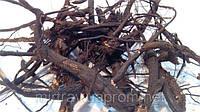 Пятипал корень 100 грамм (лапчатка белая, перстач)