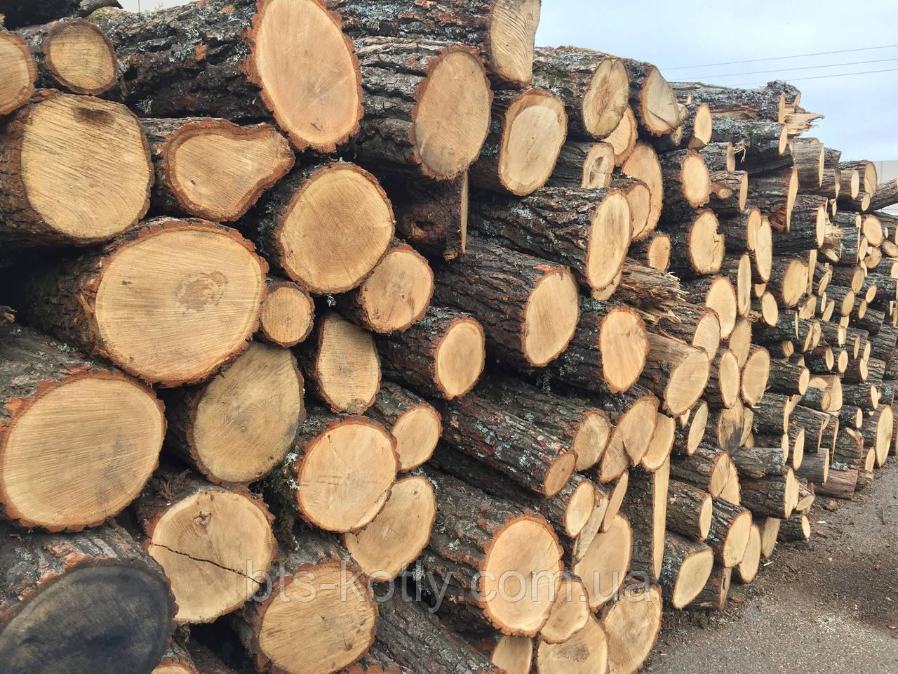 Взяв хабар дровами: у Франківську засудили податківця-корупціонера