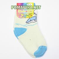 Детские махровые носки р. 80-86 для новорожденного 95% хлопок 5% эластан ТМ Biedronka 3364 Голубые