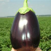 Семена баклажана Галине F1. Упаковка 50 гр. Производитель Clause
