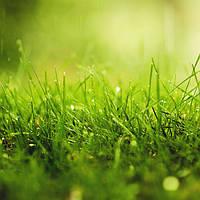 Посевной газон, фото 1