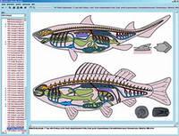 Программа «Зоология в классе», на компакт-диске