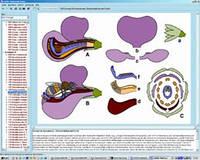 Программа «Биология цветков и плодов», на компакт-диске
