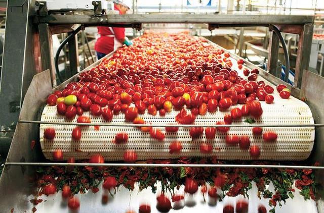 Банк, кредитующий отсталые европейские регионы, хочет профинансировать рынок томатной пасты в Украине