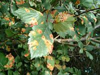 Методы и средства для борьбы с болезнями сельскохозяйственных растений