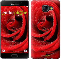 "Чехол на Samsung Galaxy A5 (2016) A510F Красная роза ""529c-158"""