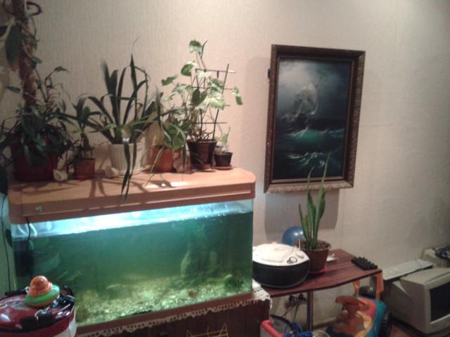 Фото комнаты для посуточной аренды