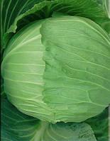 Семена капусты б/к Экстра F1, от 0.5г, Nasko 500 шт.