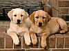 5 способов лечения суставов у собак