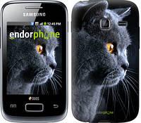 "Чехол на Samsung Galaxy Y Duos S6102 Красивый кот ""3038u-251"""