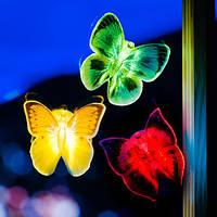 Бабочка ночник