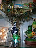 Поющие птички-король павлинов