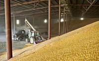 В Украине наблюдается переориентация рынков сбыта кукурузы, – мнение эксперта