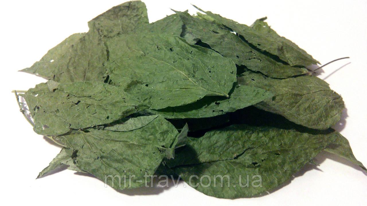 Чина весенняя листья 100 грамм (Сочевичник весенний)