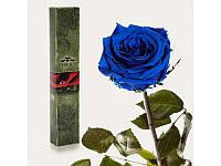 """Долгосвежая роза """"Синий сапфир"""""""