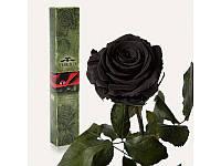 """Долгосвежая роза """"Черный бриллиант"""""""