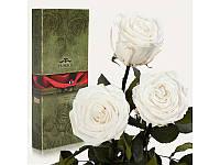 """Три долгосвежих розы """"Белый бриллиант"""""""