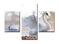 """Модульная картина из 3-х частей """"Лебедь"""""""