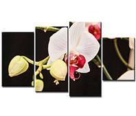 """Модульная картина из 4-х частей """"Орхидея белая"""""""