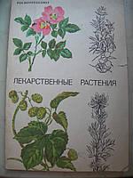Лекарственные растения. Каталог лекарственных растений