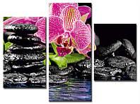 "Модульная картина из 3-х частей ""Орхидеи. Спа"""