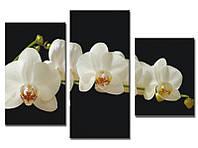 """Модульная картина из 3-х частей """"Орхидея"""""""