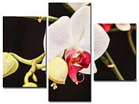 """Модульная картина из 3-х частей """"Орхидея белая"""""""