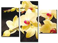 "Модульная картина из 3-х частей ""Орхидея жёлтая"""