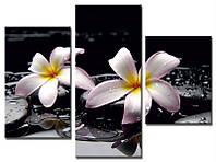 "Модульная картина из 3-х частей ""Орхидея на камнях"""
