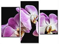 """Модульная картина из 3-х частей """"Орхидея фиолетовая"""""""