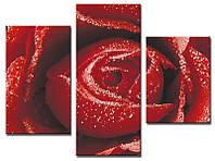 "Модульная картина из 3-х частей ""Роза бордо"""