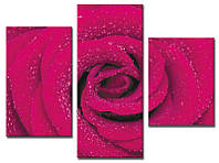 "Модульная картина из 3-х частей ""Роза розовая"""