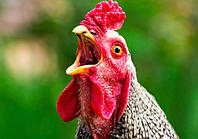 Сепаратист Олег Царев на российские деньги открывает куриный бизнес