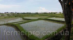 Сельское хозяйство в Индонезии. Остров Бали.
