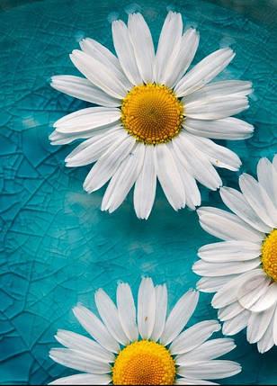 """Настінний обігрівач-картина Shine """"Ромашки"""" 84x60 см., фото 2"""