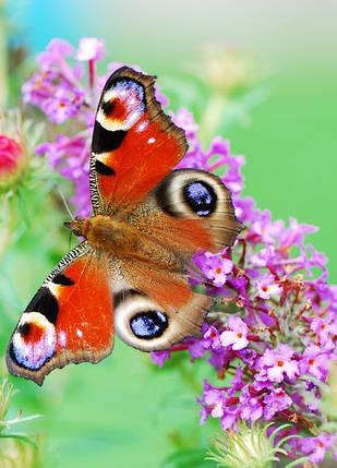 """Настінний обігрівач-картина Shine """"Метелик"""" 84x60 см., фото 2"""
