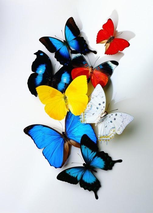 """Настінний обігрівач-картина Shine """"Метелики"""" 84x60 см."""