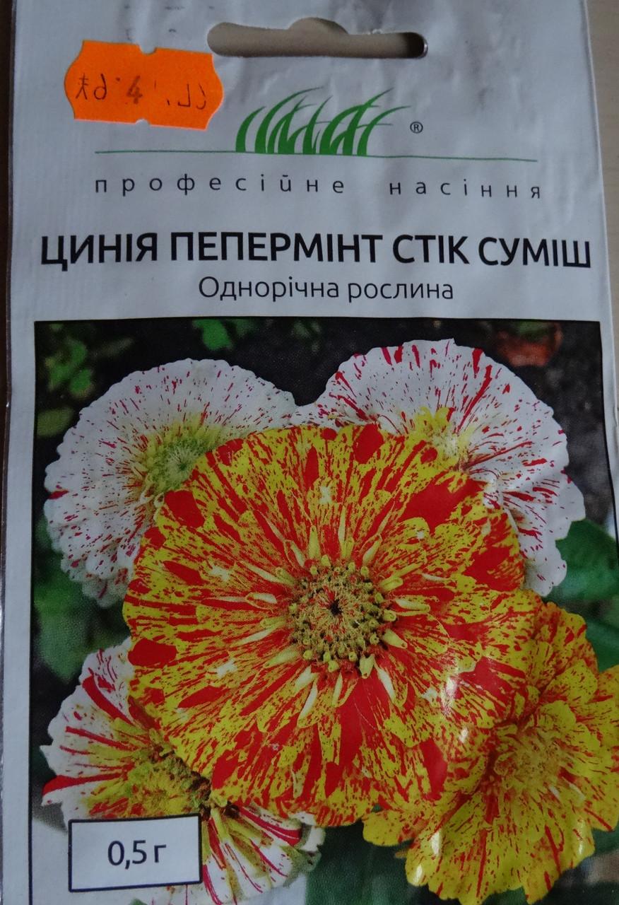 Семена цветов сорт циния пеперминт стик 0,5 г