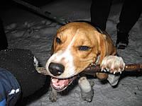 Активный выгул собак Харьков